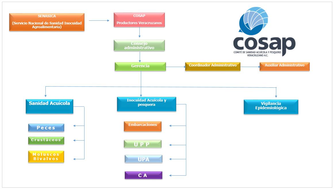 Organigrama COSAP